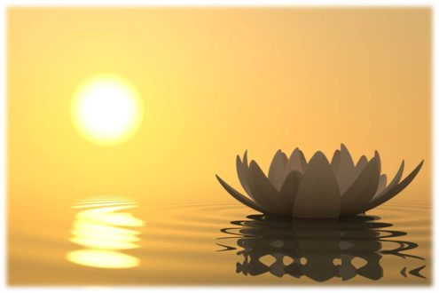 Photo of Sun and Lotus